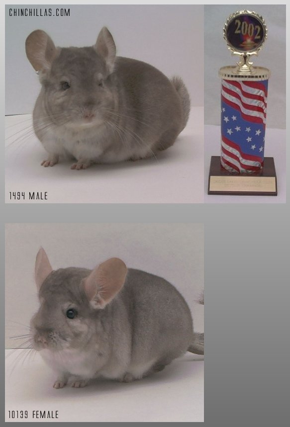 Lot 2 Shoots / Ritterspach Beige Show Pair Chinchilla
